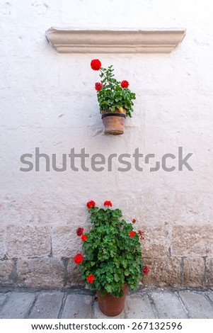 White wall and flowers in the Santa Catalina Monastery in Arequipa, Peru - stock photo