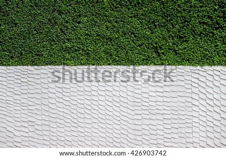 White Wall Green Plant Bush Layer - stock photo