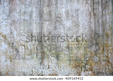 White wall moss abstract background   - stock photo