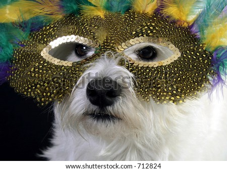White West Highland Terrier in a mardi gras mask - stock photo