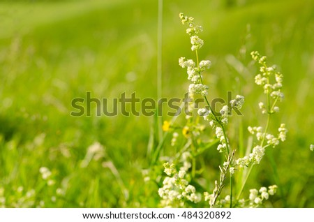 white wild flowers on a green background