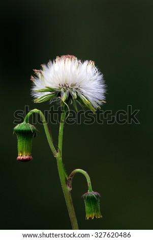 white wildflowers - stock photo