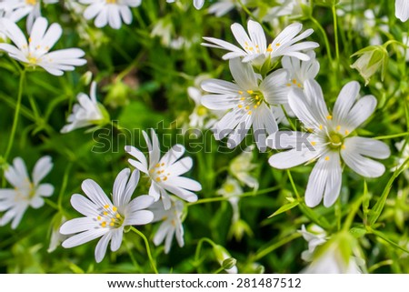 White wildflowers in a green garden - stock photo