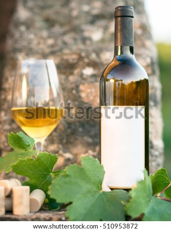 White wine bottle, glass, young vine leaves against soft background, Italy