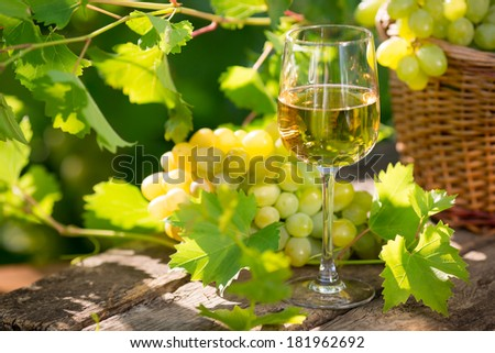 White wine in glass, young vine and bunch of grapes against green spring background