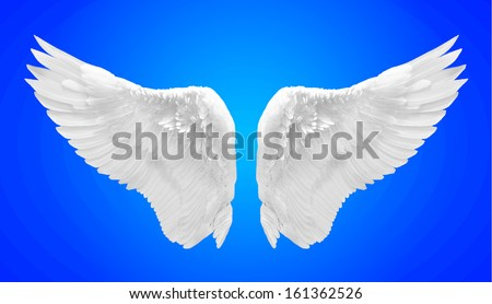 white wing isolated - stock photo