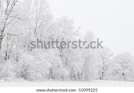 White winter - stock photo