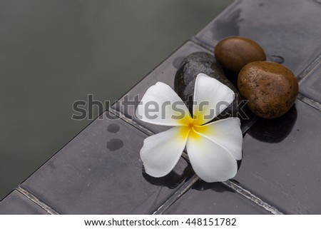 White with yellow plumeria flower on pebble rock and water for spa background - stock photo