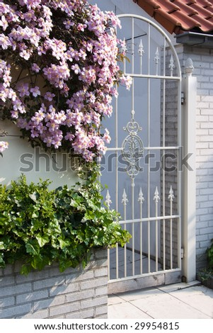 White wrought iron gate with pink clematis montana flowers in spring - stock photo