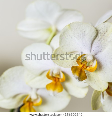 white yellow Orchid flowers cosmetics on brown background