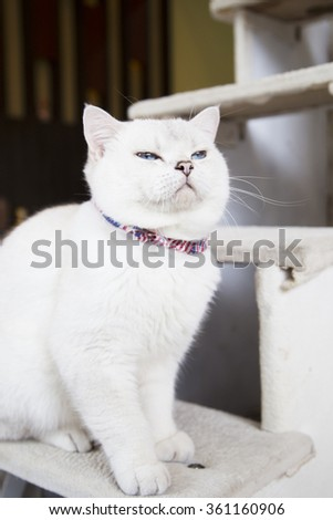 white young cat - stock photo
