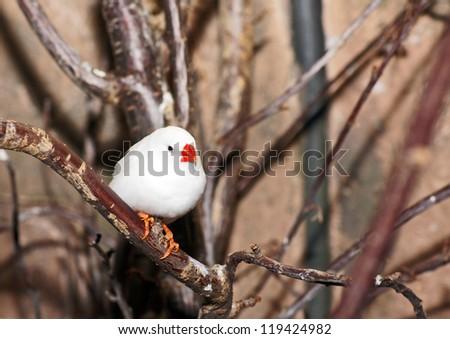 White Zebra Finch - stock photo
