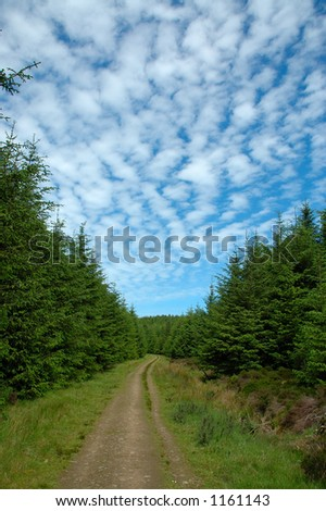 Whitecow Wood Aberdeenshire - stock photo