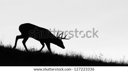 Whitetail Buck Deer Stag, black & white silhouette, head down in the sneak position, Midwestern Deer Hunting the Midwest - stock photo