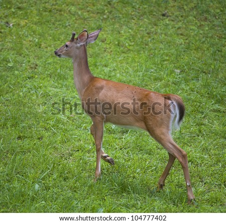 Away Deer Running At Stock Photos, Away Deer Running At ...
