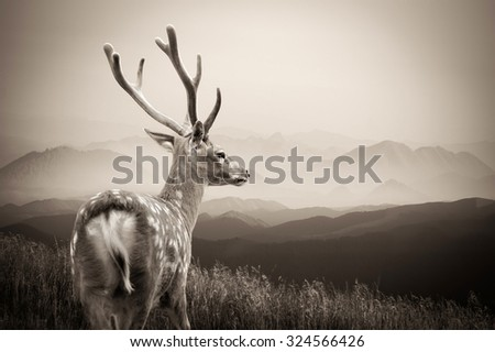 Whitetail Deer standing in mountain - stock photo