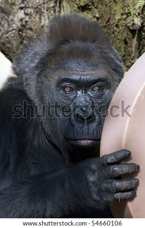 Who are you looking at? - stock photo