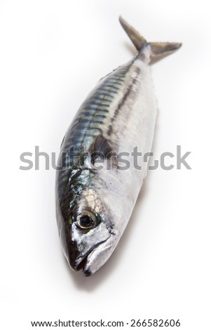 Whole Atlantic mackerel (Scomber scombrus) fish isolated on a white studio background. - stock photo