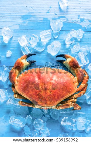 Whole fresh crab portrait, on wooden table