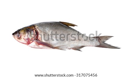 whole round sliver carp fish on white background - stock photo