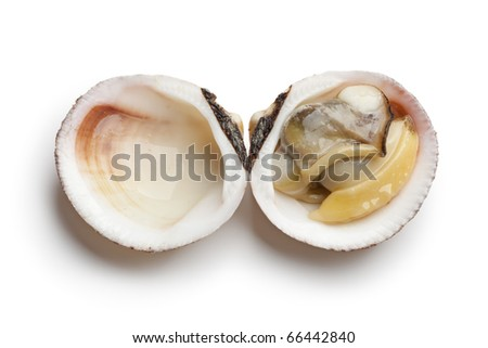 Whole single cooked open Dog cockle on white background