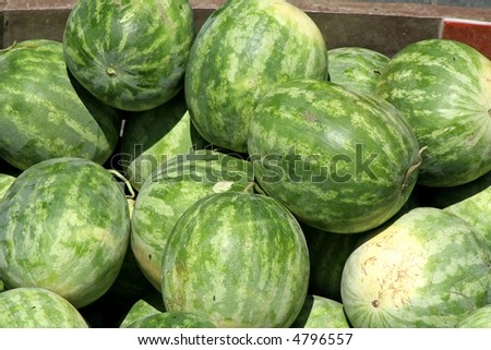 whole watermelon on display in market