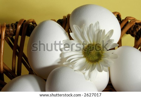 whole white eggs and daisy on yellow background