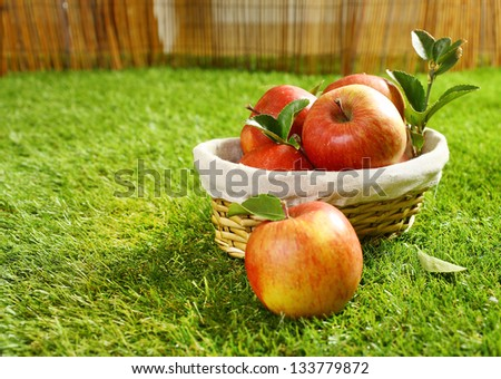 Wicker basket full of freshly picked apples lying on green grass in the garden with a single apple in the foreground on the lawn - stock photo