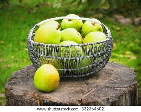 Wicker basket of ripe pears outdoors in the garden toning - stock photo