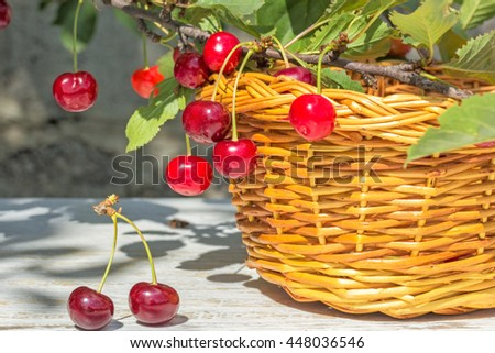 Wicker basket, red ripe cherries on white wooden table and on a branch with green leaves in the garden on a sunny summer day, close-up - stock photo