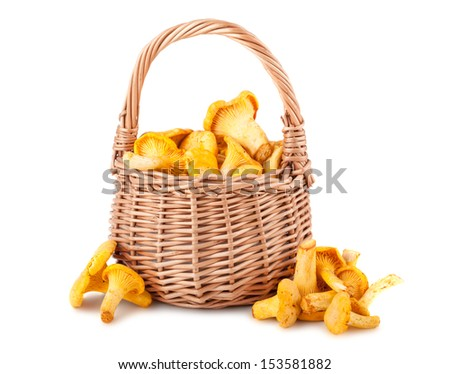 Wicker basket with chanterelle mushrooms on a white background - stock photo