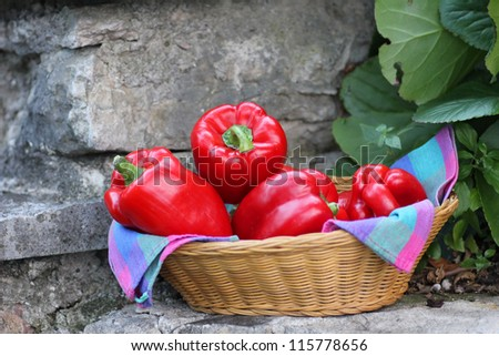 wicker basket with red sweet peppers - stock photo