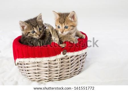 Wicker basket with two little kittens - stock photo