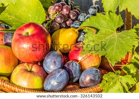 Wicker basket with various fruits and vine leaves in the evening sun in the garden, close up - stock photo