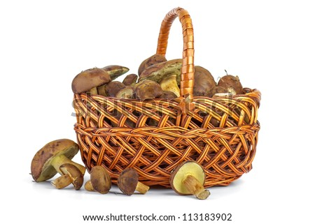 Wicker basket with yellow boletus mushrooms near isolated on the white background - stock photo