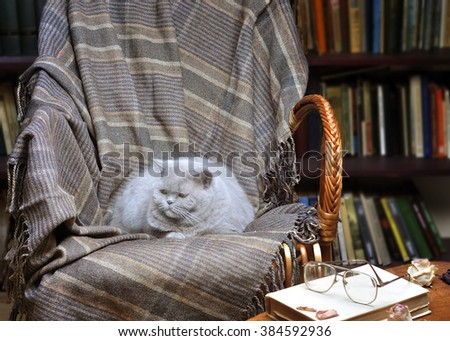 Wicker chair with cat and blanket on the background of bookshelves - stock photo