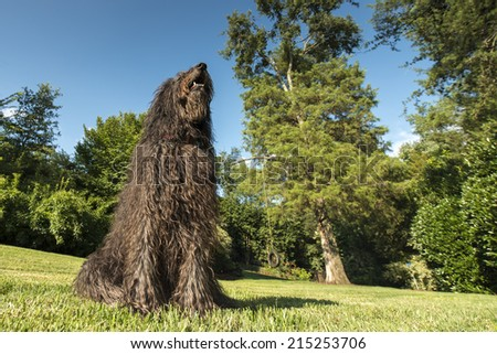 Wide angle shot of a black labradoodle dog in a yard with trees - stock photo
