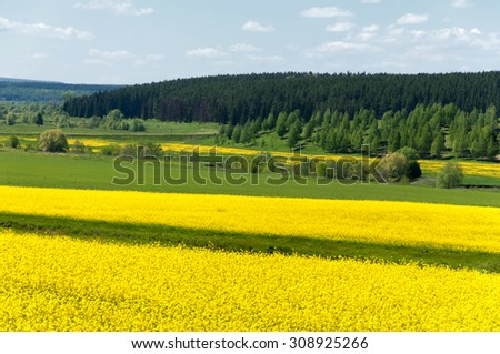 Wide angle view of a beautiful field of bright yellow canola or rapeseed in front of a forest. flowers of oil in rapeseed field with blue sky and clouds. - stock photo
