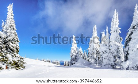 Wide snowfields, snow covered trees and deep snow pack in the high alpine ski area at Sun Peaks in the Shuswap Highlands of central British Columbia, Canada - stock photo