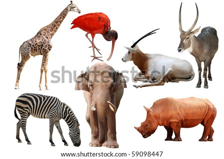 wild animal collection isolated on white - stock photo