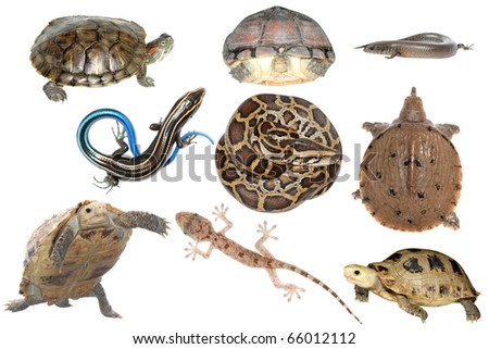wild animal collection reptile snake lizard turtle and tortoise - stock photo
