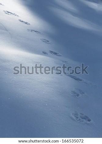 Wild animal footprints in the snow - stock photo