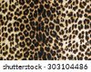 wild animal pattern background or texture - stock photo
