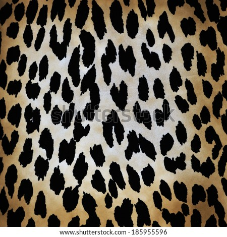 wild animal pattern background or texture close up - material