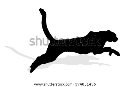 wild animal - puma - stock photo