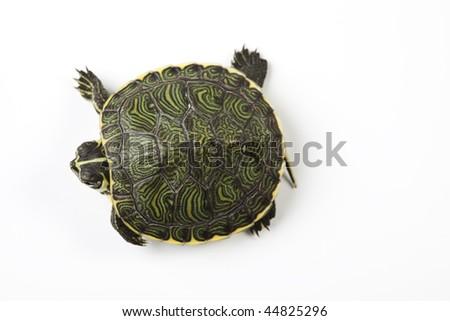Wild animal - turtle - stock photo