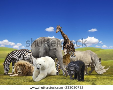 Wild animals group - stock photo