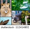 Wild animals in the zoo collage - stock photo