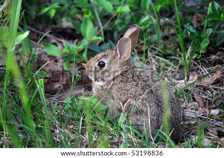 Wild baby rabbit on the edge of a thicket