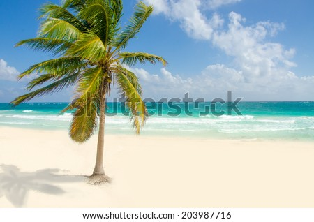 Wild Beach at Tulum  -  Yucatan Mexico